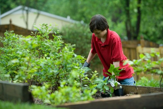 Ways You Can Improve the Look of Your Garden